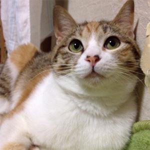 cat0011
